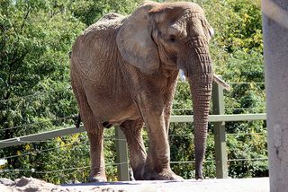 Tada! It's an elephant!